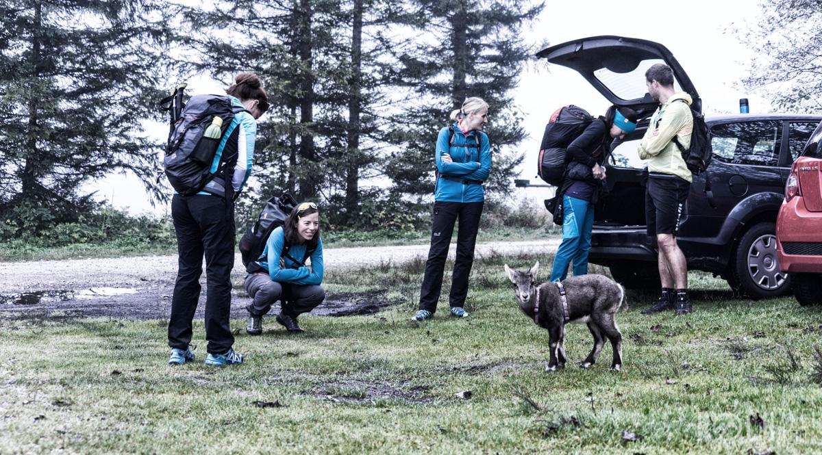 Steinbock Baby Wanderung Zwölferkogel Almsee