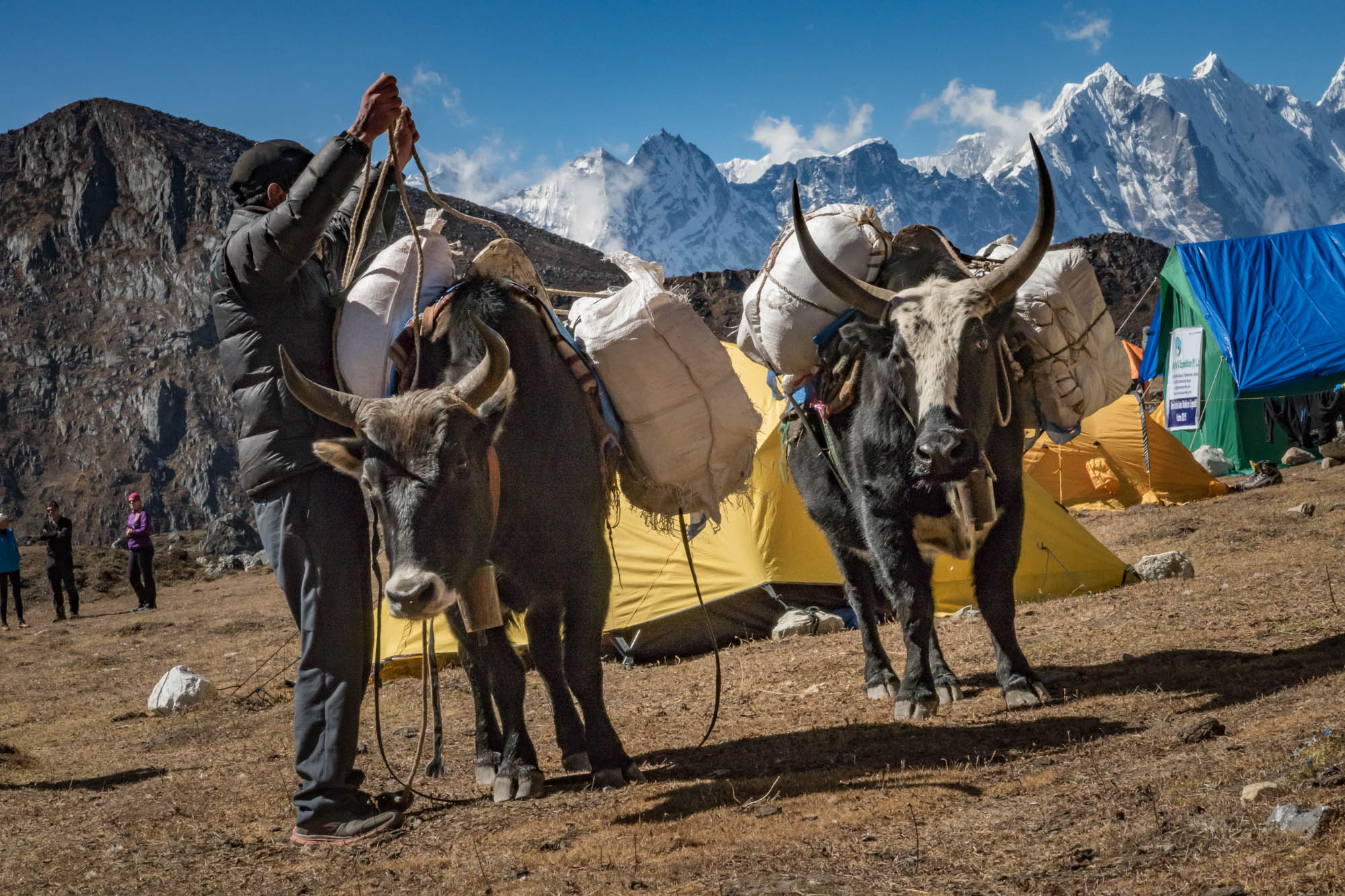 Yaks, Esel und Jockeys spielen beim Expeditions-Bergsteigen eine tragende Rolle