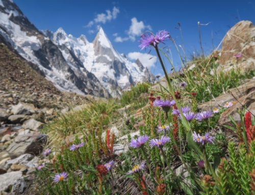 Laila Peak, das Herz blüht auf